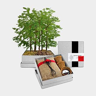 Bonsai Forest Growing Kit