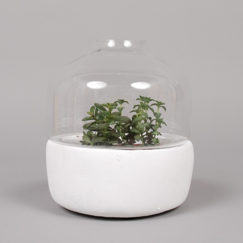 Serax Greenhouse Pot Small Wide