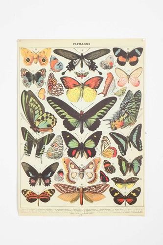 Butterfly Specimen Poster Urban Outfitters