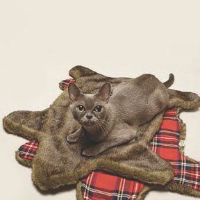 Loyal Luxe The Faux Bearskin Cat Rug at Velocity Art And Design Your home for modern furniture and accessories in Seattle and the US