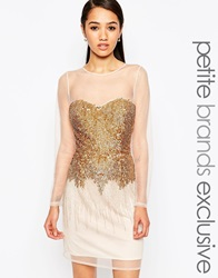 Maya Petite Sheer Skater Dress With Sequins Gold