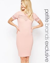 Paper Dolls Petite Lace Insert Pencil Dress Pink