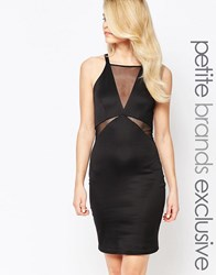 John Zack Petite Sleeveless Mesh Insert Plunge Bodycon Dress Black