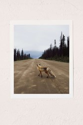 Urban Outfitters Kevin Russ Road Fox Art Print No Frame