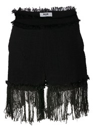 Msgm Fringed Shorts Black
