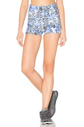 Lorna Jane Animal Instinct Short Tight Blue