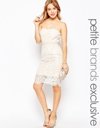 Paper Dolls Petite Bandeau Pencil Dress With Lace Overlay Beige