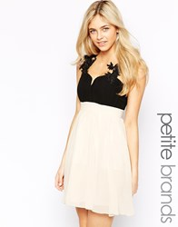 Little Mistress Petite Plunge Neck Skater Dress With Lace Detail And Cut Out Back Black