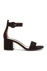 Gianvito Rossi Ankle Strap Suede Heels In Black