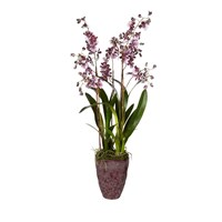 Sia Potted Purple Dancing Orchid Large