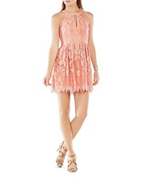 Bcbgmaxazria Megyn Lace Fit And Flare Dress Coral