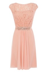 Coast Lori Lee Lace Short Dress Peach