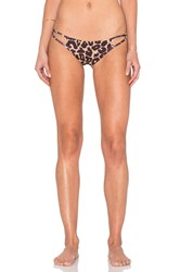 Stone Fox Swim Laguna Bikini Bottom Brown