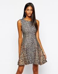 Arrogant Cat Leopard Print Peplum Hem Dress