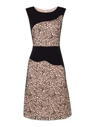 Shubette Colour Block Lace Panel Dress