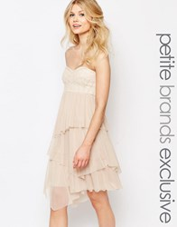 John Zack Petite Bandeau Baroque Sequin Mesh Ruffle Tulle Midi Dress Blush Cream