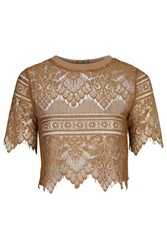 Sweetheart Lace Crop Top By Glamorous Olive