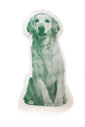 Areaware Golden Retriever Mini Cushion