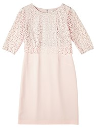 Precis Petite By Jeff Banks Floating Lace Dress Light Pink