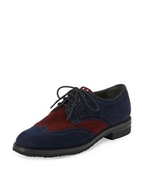 Gravati Colorblock Suede Brogue Oxford Burgundy Navy
