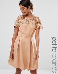 Paper Dolls Petite Prom Dress With Tonal Lace Overlay Camel Tan