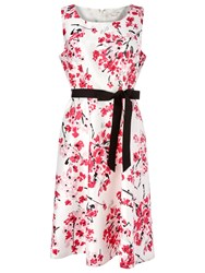 Precis Petite Floral Print Belted Dress Pink Multi