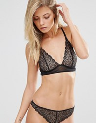 Lepel London Sophia Triangle Bra Black