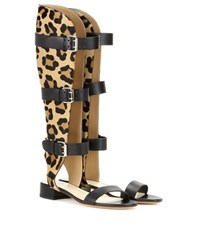 Francesco Russo Leather And Printed Calf Hair Gladiator Sandals Black