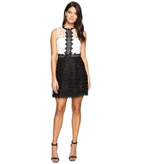 Adelyn Rae Lace Fit And Flare White Black Women's Dress