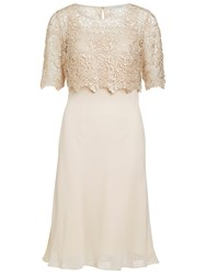Gina Bacconi Chiffon Dress With Guipure Lace Top Beige
