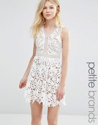 New Look Petite Cutwork Lace Skater Dress White Patt