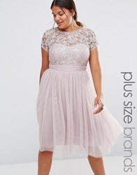 Little Mistress Plus Short Sleeve Lace Bodice Midi Dress With Tulle Skirt Pink