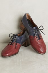 Anthropologie Kupuri Edith Lace Up Oxfords Nappa Marino Snake Borderos