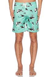 Ambsn Whilly Boardshort Green