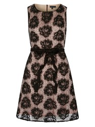Mela Loves London Rose Lace Occasion Dress Black White