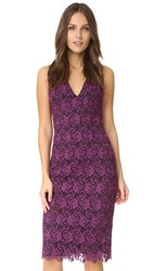 Alice Olivia Preslee Fitted Lace Midi Dress Plum Black