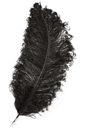 Christopher Kane Feather Brooch Black