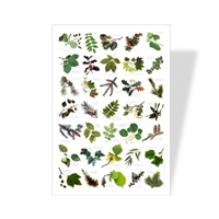 Tree Leaves Poster Science Poster For Kids Eco Friendly Nature Poster