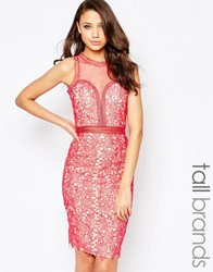 Little Mistress Tall Lace Cutwork Pencil Dress With Mesh Insert Coral