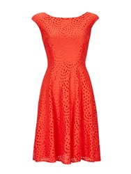 Wallis Petite Orange Lace Fit And Flare Dress
