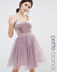 Little Mistress Petite Velvet Top Mini Skater Dress With Tulle Skirt Lavender Purple
