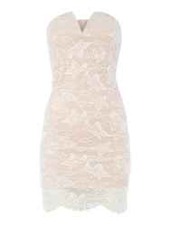Wal G Strapless Bandeau Lace Mini Dress Pink
