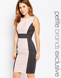 Paper Dolls Petite Lace Insert Pencil Dress With Bow Detail Multi