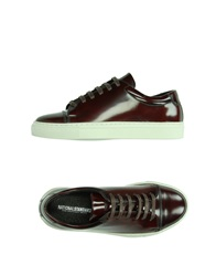 National Standard Sneakers Maroon
