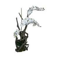 Sia Phalaenopsis Orchid And Branches