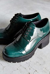 Patent Dioon Oxford Green