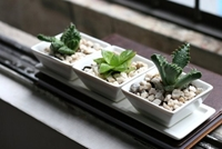 Amazon.Com Set Of 3 Decorative Modern White Square Flower Succulent Planters Dishes With Display Tray Patio Lawn And Garden