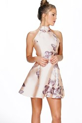 Boohoo Sateen Butterfly Print Fit And Flare Dress Blush