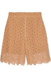 Chloe Cotton Blend Macrame Lace Shorts Pink