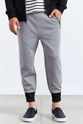 Feathers Poly Spandex Jogger Pant Grey